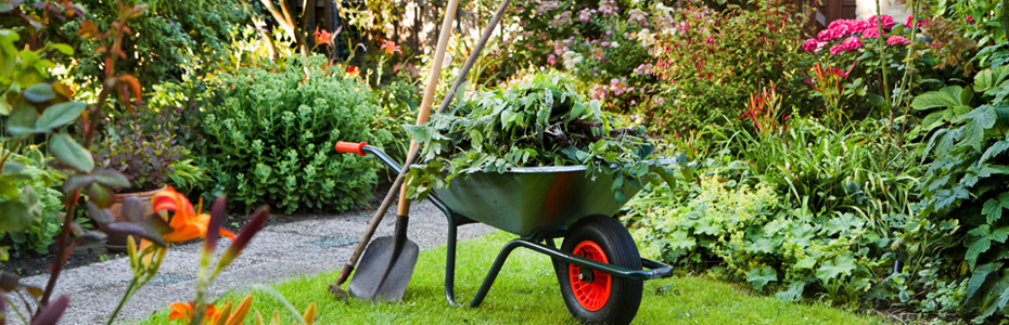 Dise o de jardines el salvador casa dise o for Arboles jardineria